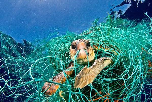 La Comisión Europea ha propuesto la prohibición total de las  redes de deriva