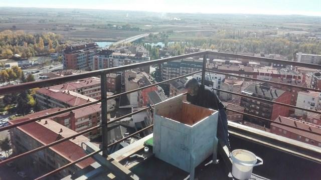 Halcones, lechuzas y murciélagos controlarán las plagas de palomas en Zamora