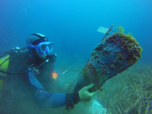 Mediterráneo y centros de investigación para evitar la extinción de la nacra