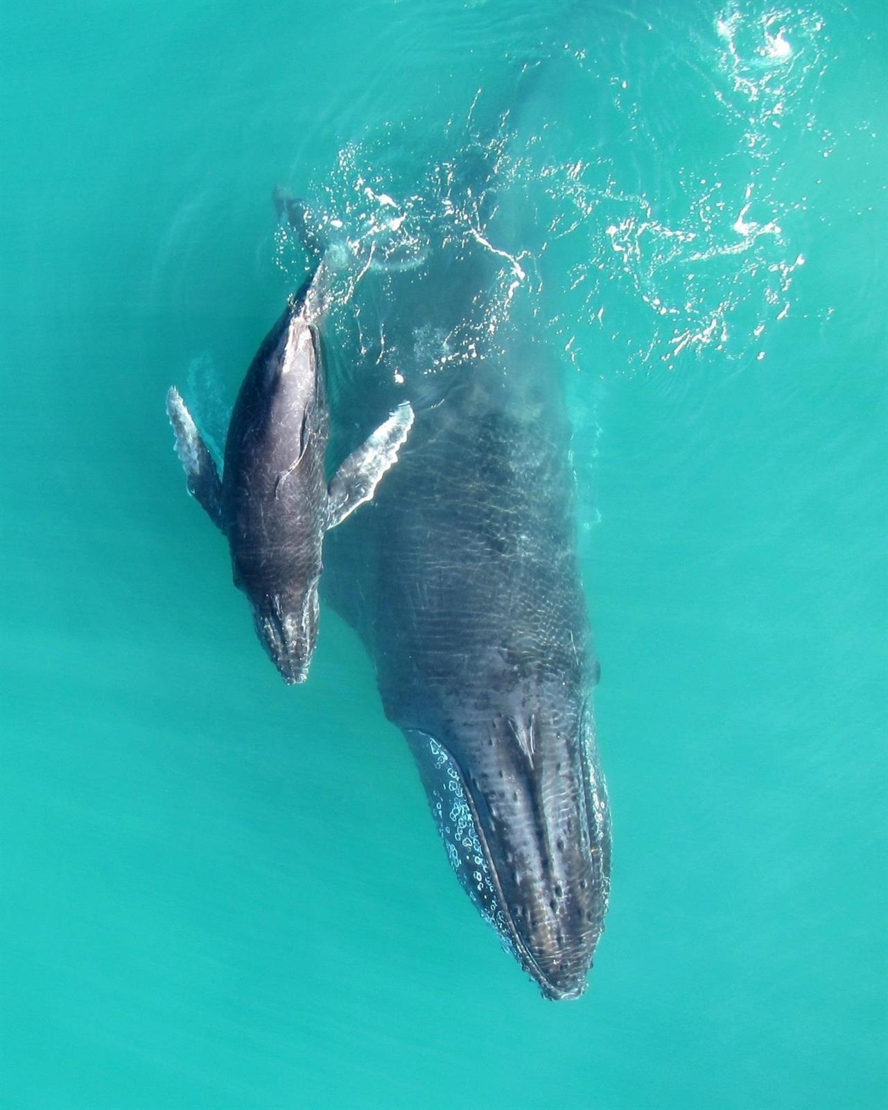 La Eurocámara pide a Noruega que detenga la caza de ballenas