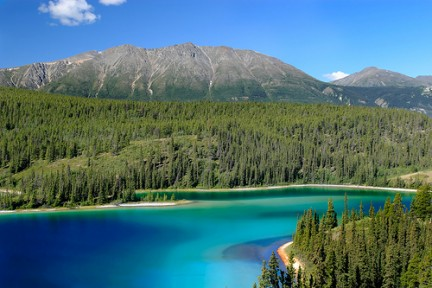 Inédito esfuerzo para proteger bosque boreal canadiense