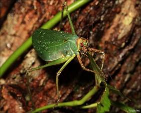 Porqué la taxonomía es importante para la ciencia que estudia la biodiversidad