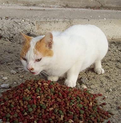 3.000 kilos de alimentos para perros y gatos abandonados
