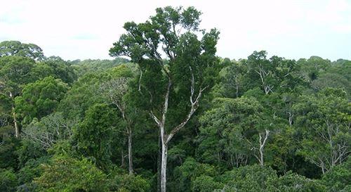 La Amazonia reduce considerablemente el CO2 del planeta