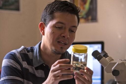 Una rana de cristal que 'reaparece' en Ecuador