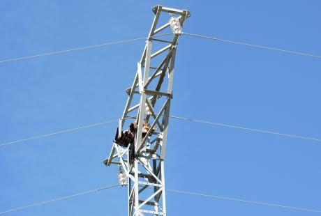 Localizan dos águilas reales electrocutadas en Cantavieja, Teruel