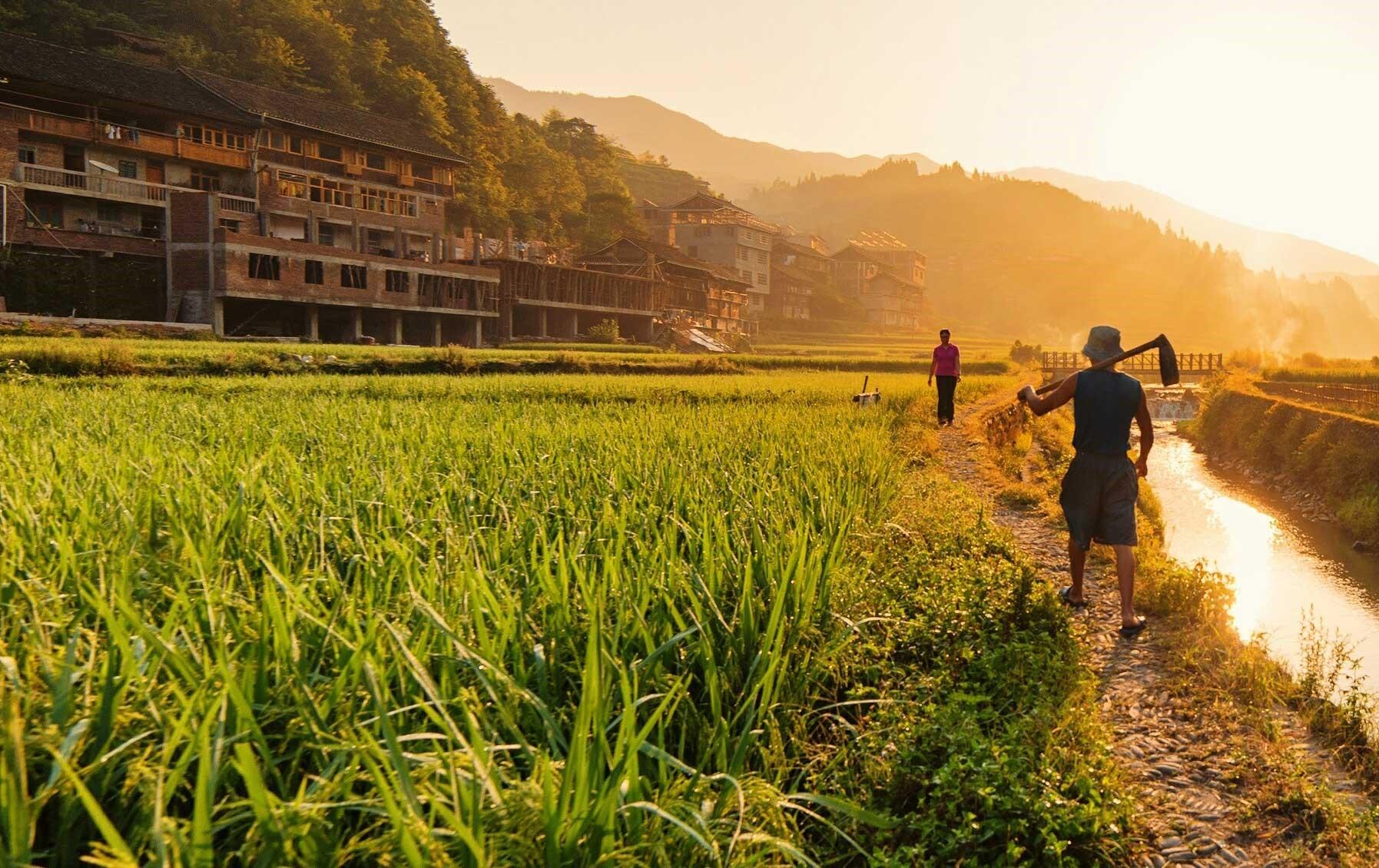 Brasil: ¿líder en agricultura sostenible?