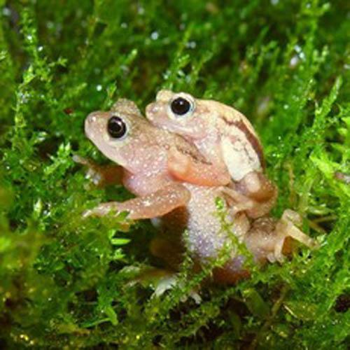 17.921 especies de flora y fauna están en peligro de extinción