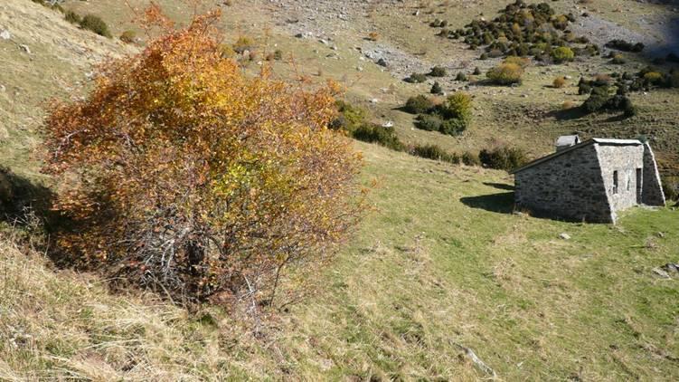 Encuentro sobre restauración ambiental de zonas de alta montaña