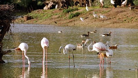 Medio Ambiente presentará en 2013 un Plan de Turismo-Diversidad para fomentar el turismo en espacios protegidos
