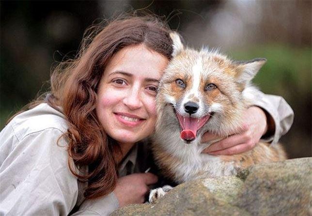Este zorro adoptado actúa como 'el mejor amigo del hombre' (vea el sorprendente video)