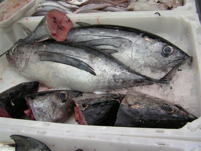 España termina mañana su propio pescado y el resto del año dependerá del exterior