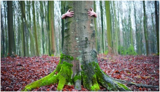 Ecología y Medio Ambiente: ¿cuál es su papel en nuestras vidas?