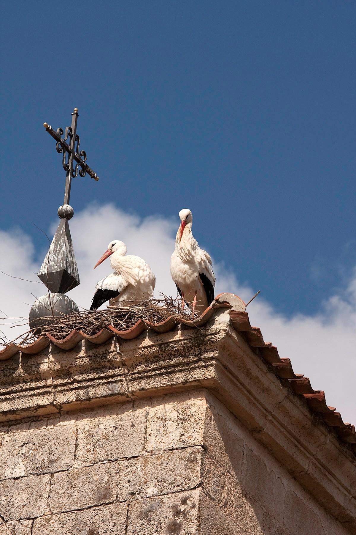Colectivo Azálvaro entiende la retirada de los nidos de cigüeña de la Iglesia de El Espinar, sólo de forma temporal
