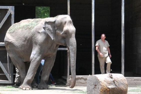 Argentina. La elefanta Pelusa será trasladada a un santuario de Brasil