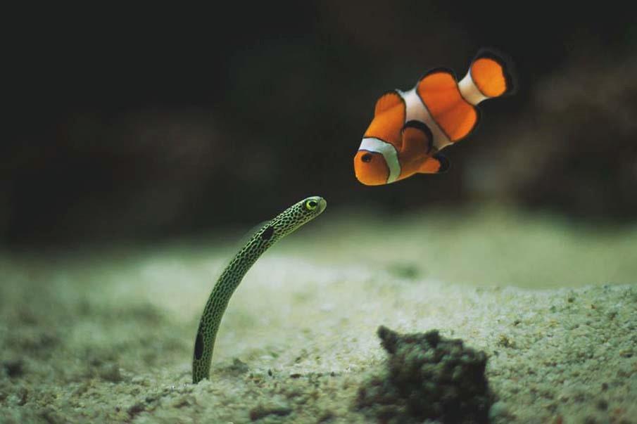 La salud y sostenibilidad del océano son prioritarias