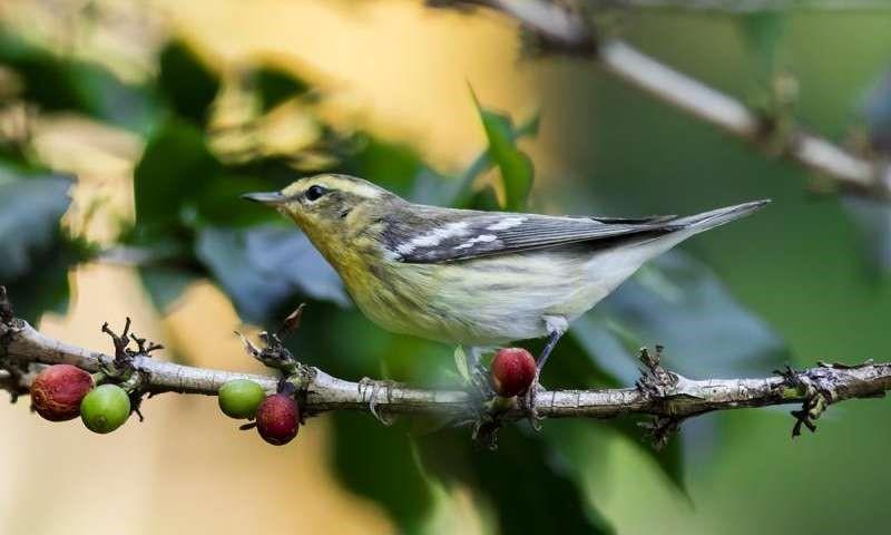 Un café colombiano sostenible y respetuoso con las aves