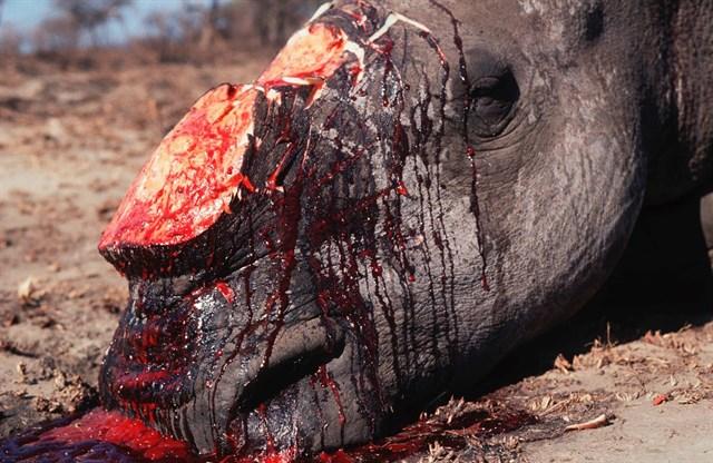 El tráfico ilegal de especies amenazas, la 'lacra' del siglo XXI