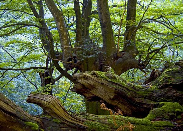 Navarra impulsa el uso de la biomasa forestal para dinamizar la economía y empleo