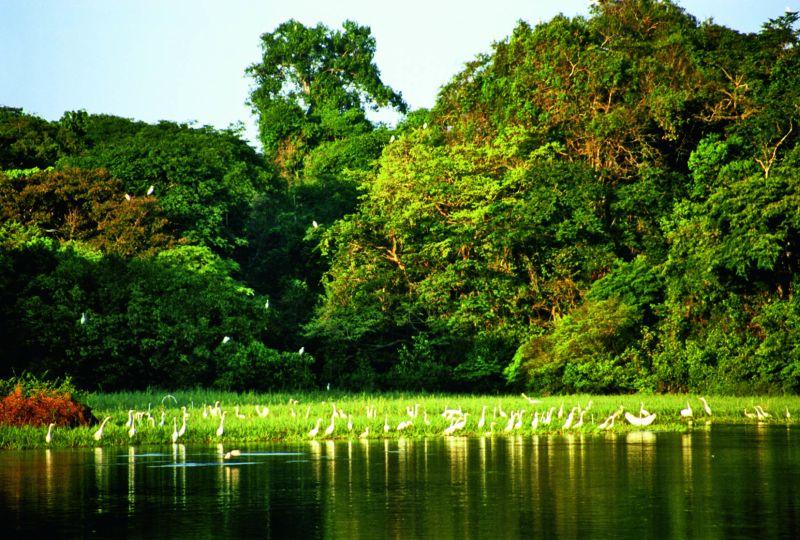 Gobernabilidad y manejo forestal comunitario en la Amazonía Peruana