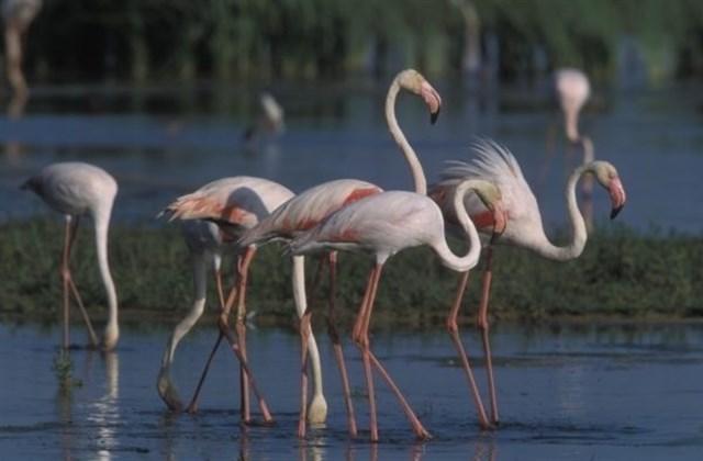 Torrevieja promocionará en Reino Unido las Lagunas de La Mata y Torrevieja como