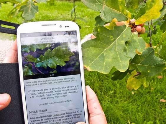 'ARBOLAPP' para identificar árboles en Península y Baleares