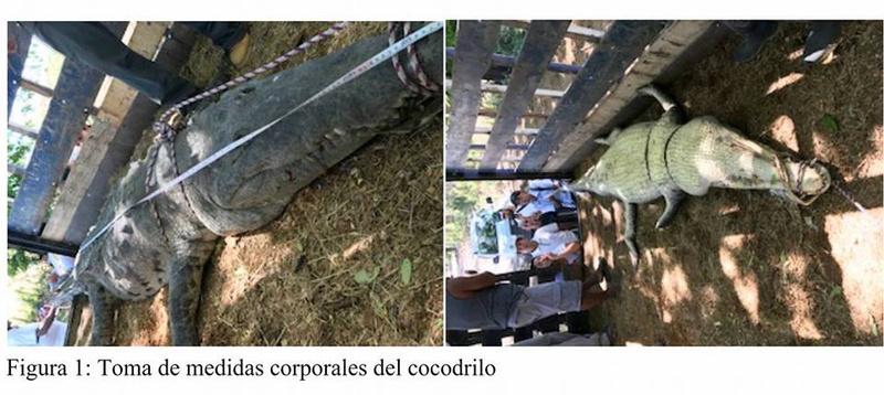 Costa Rica. 6.000 personas firman petición contra lagarteada