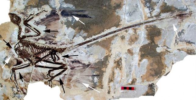 Los dinosaurios evolucionaron hacia el vuelo sin pretenderlo