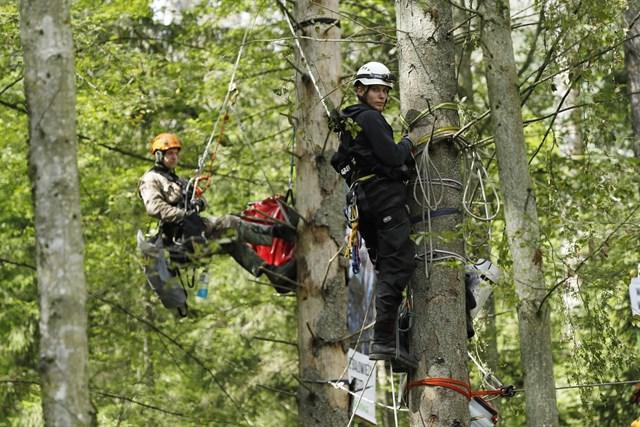 Varios activistas se suben a unos árboles en señal de protesta contra la tala ilegal en Polonia