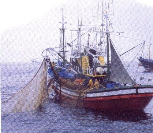 Bruselas plantea reducir al menos un 25% la pesca de especies de las que no haya suficientes datos científicos