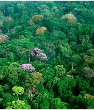 Vegetación 'enemigo nº1' del CO2