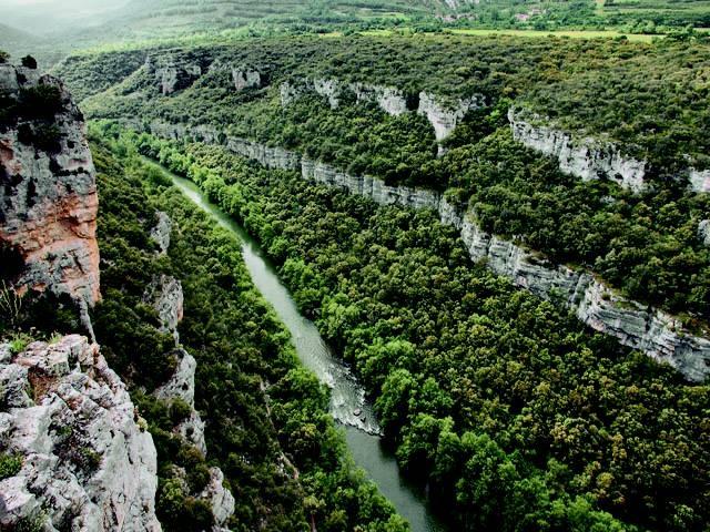 Diez acciones sostenibles para los bosques
