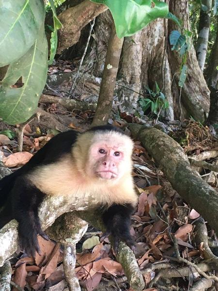 Costa Rica. Estas son las razones de por qué podrían cerrar el parque Manuel Antonio