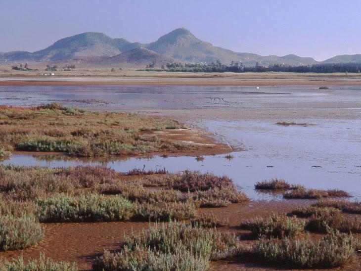 Declarar YA al Mar Menor en peligro de extinción