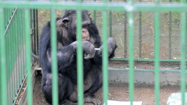 Piden prohibir el comercio y tenencia de primates entre particulares