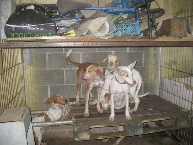 Rescatados una docena de perros que se encontraban hacinados en una nave y en malas condiciones higiénicas