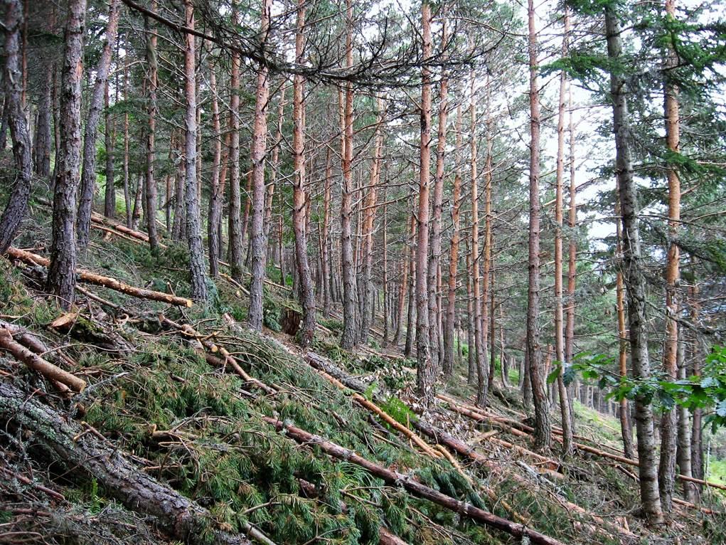 Extraer biomasa para usos energéticos evita incendios forestales
