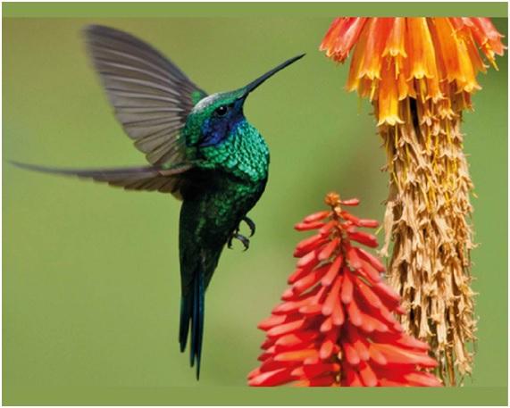 Los 10 países con mejor biodiversidad del mundo
