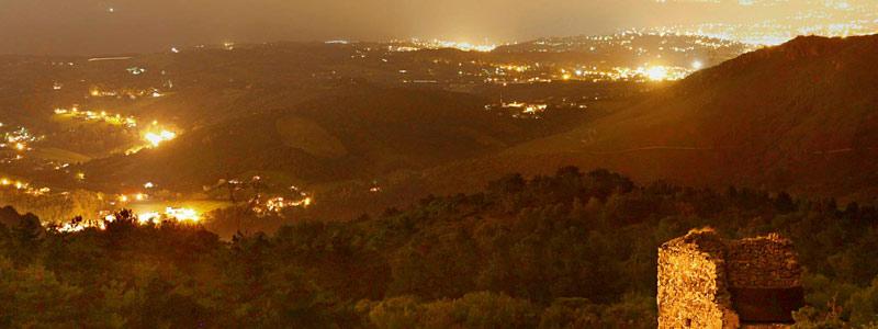 ¿Cómo afecta la contaminación lumínica a las plantas?