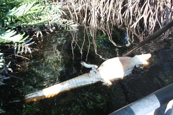 México: Un derrame de aceite provocó una muerte masiva de especies en el río Tonalá