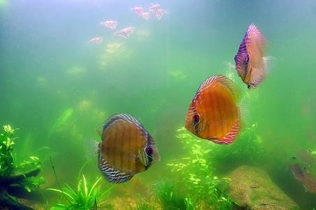 Contaminación y exceso de algas