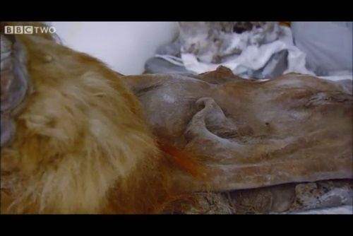 Encuentran sangre líquida en los restos de un mamut lo que abriría la puerta a su clonación