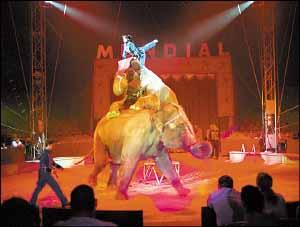 En las atracciones de la Feria de Sevilla hay 'maltrato' animal