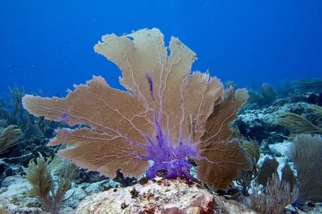 Pólizas de seguros en arrecifes de coral, la propuesta de expertos para conservarlos y restaurarlos tras los temporales