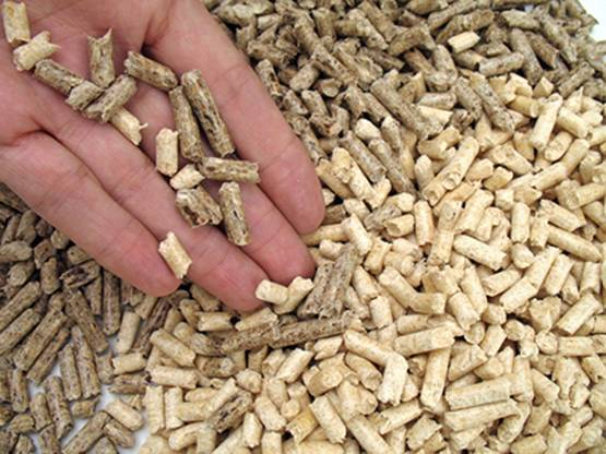 Curso para ser un experto en Energía de la Biomasa