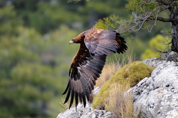 Rastros de la fauna ibérica, un curso que te apasionará
