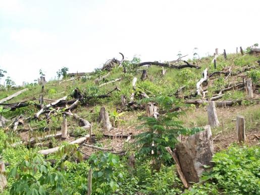 BOSQUES Eco-nomía verde