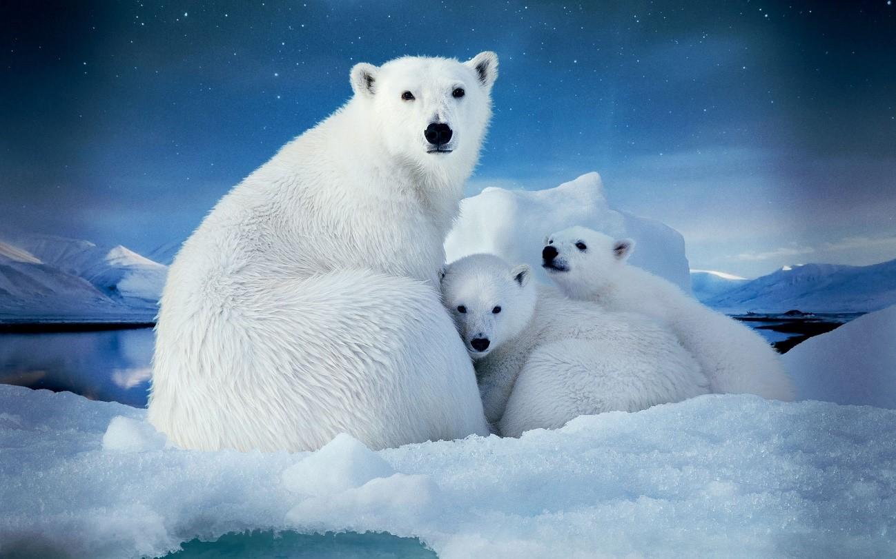 El Ártico es mucho más que osos polares