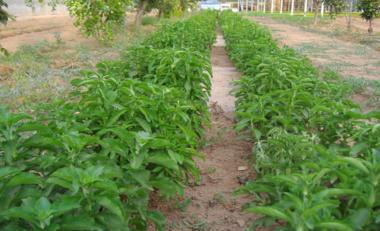 Dulce Revolución: la sanación mediante plantas y terapias naturales