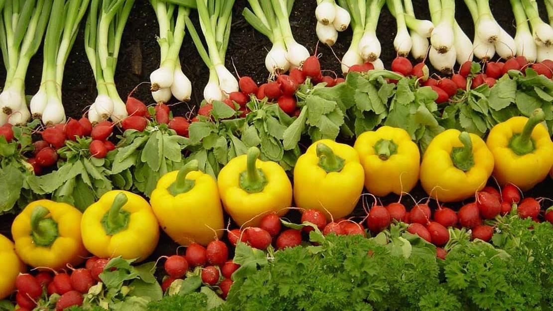 La Eurocámara respalda las nuevas reglas de agricultura ecológica